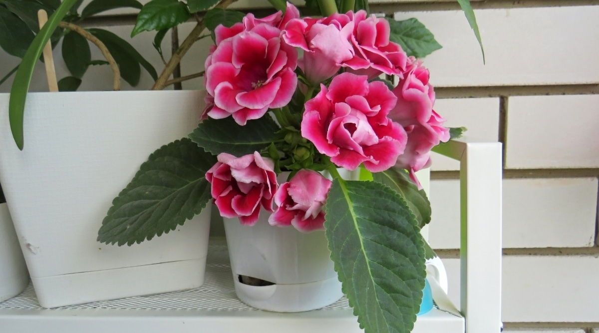 Pink Plant on a Shelf Indoors