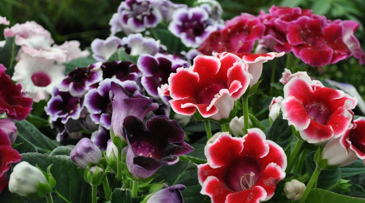 Red Purple and White Flowers in a Garden