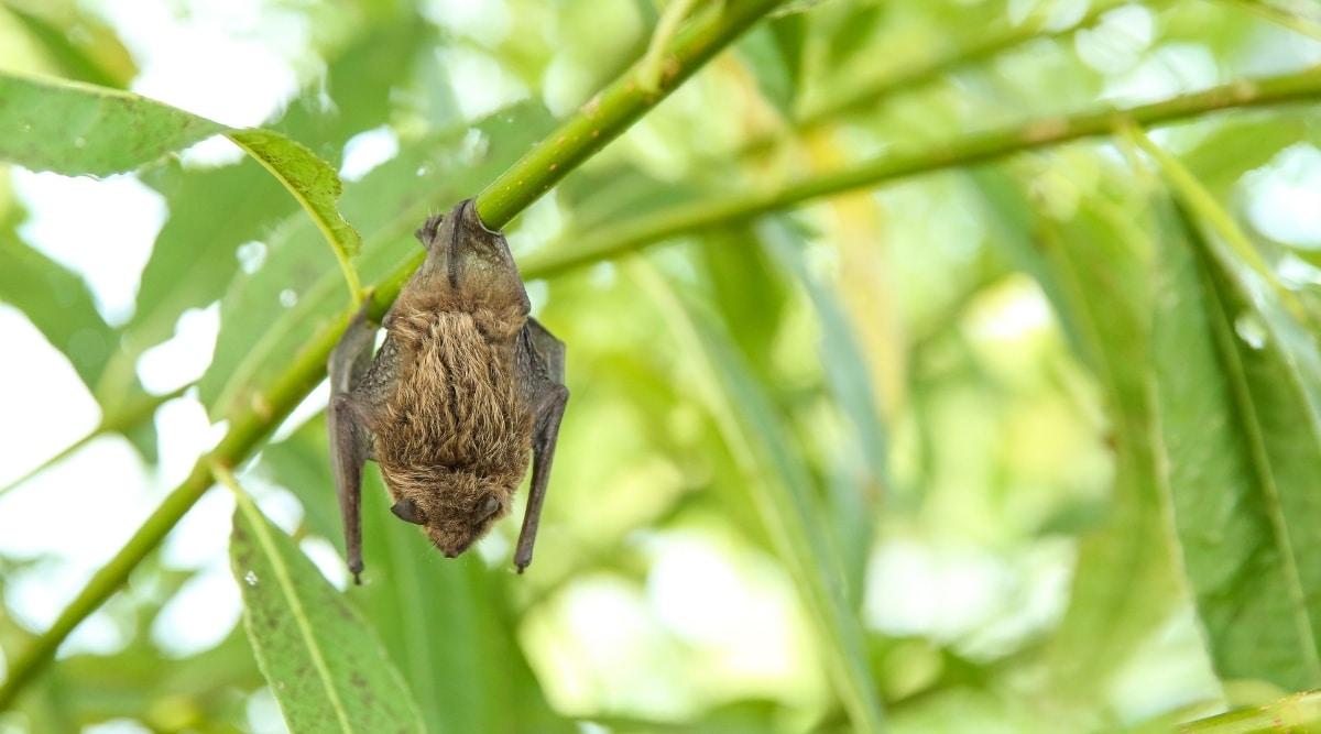 Bat in Garden