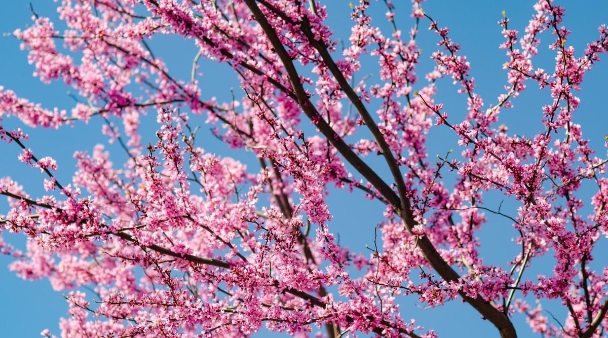 Beautiful Flowers Growing on Leafless Branch