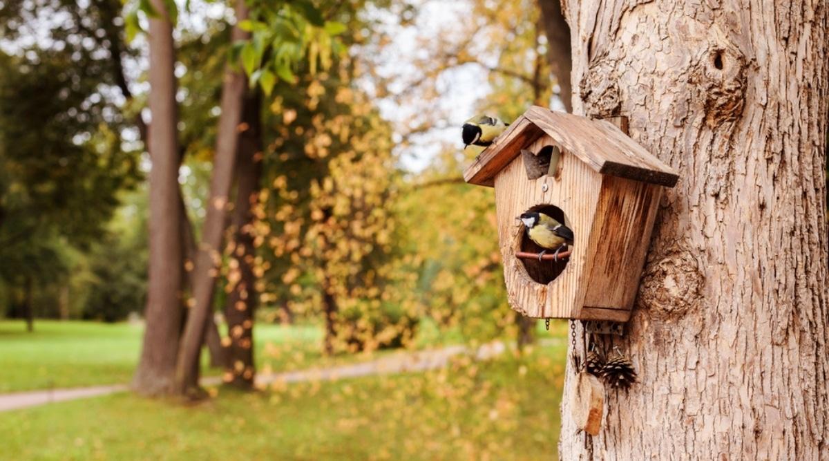 Birds Enjoying a Bird House