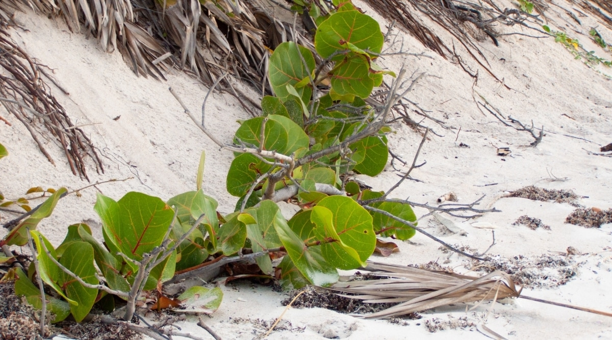Branch of a Tree on Sand of a Beach