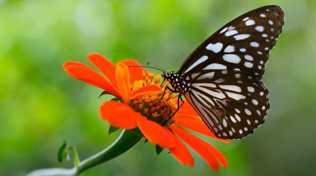 Butterfly on Flower Feeding