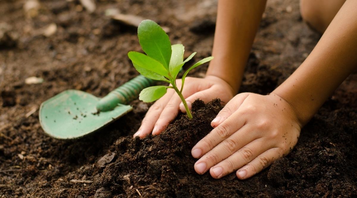 Child Gardening With Shovel