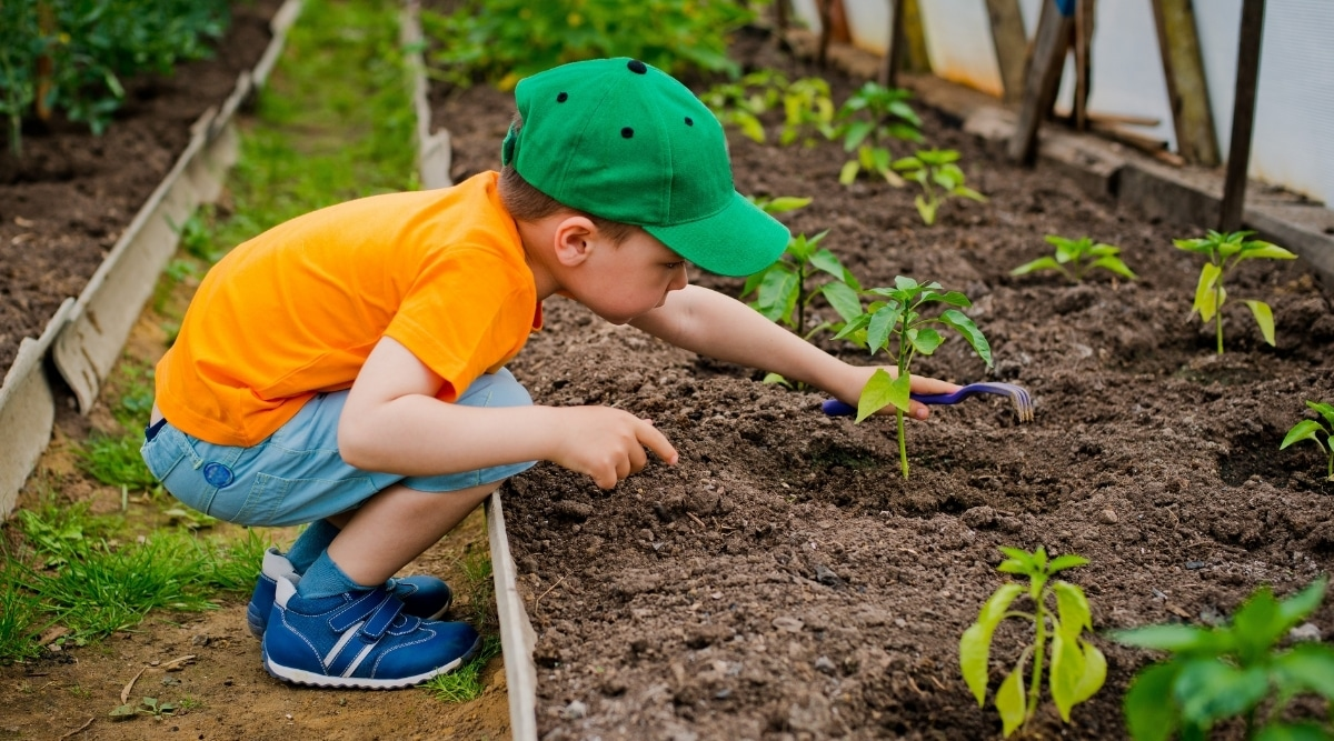 Child Looking at Plants in Garden