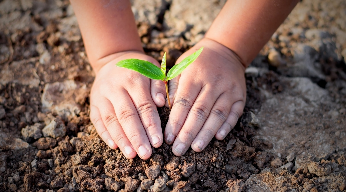 Child Planting a Small Plant