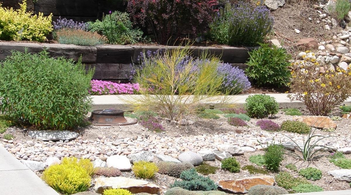 Desert Plants Irrigating Water