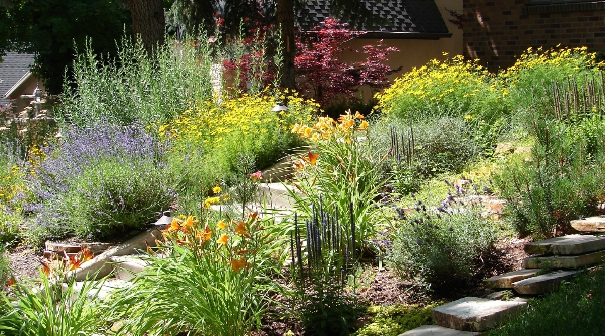 Flowers Xeriscaped in Backyard