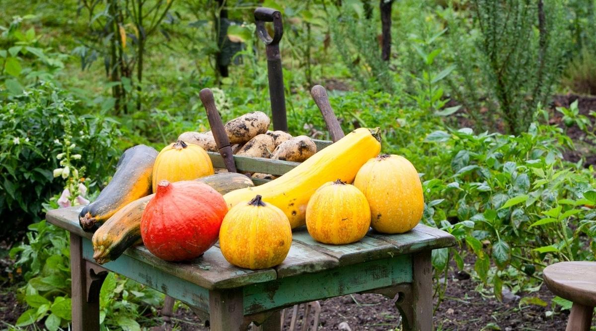 Garden Gourds