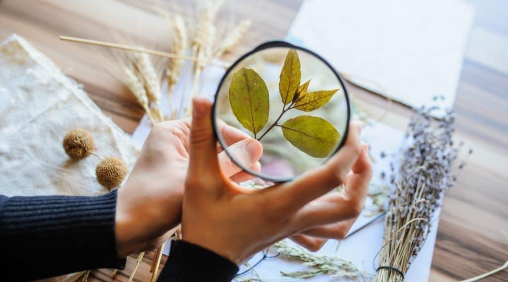 Horticulturist vs Botanist Examining Plant
