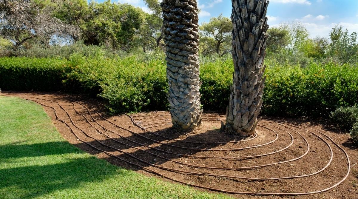 Irrigation Watering Trees