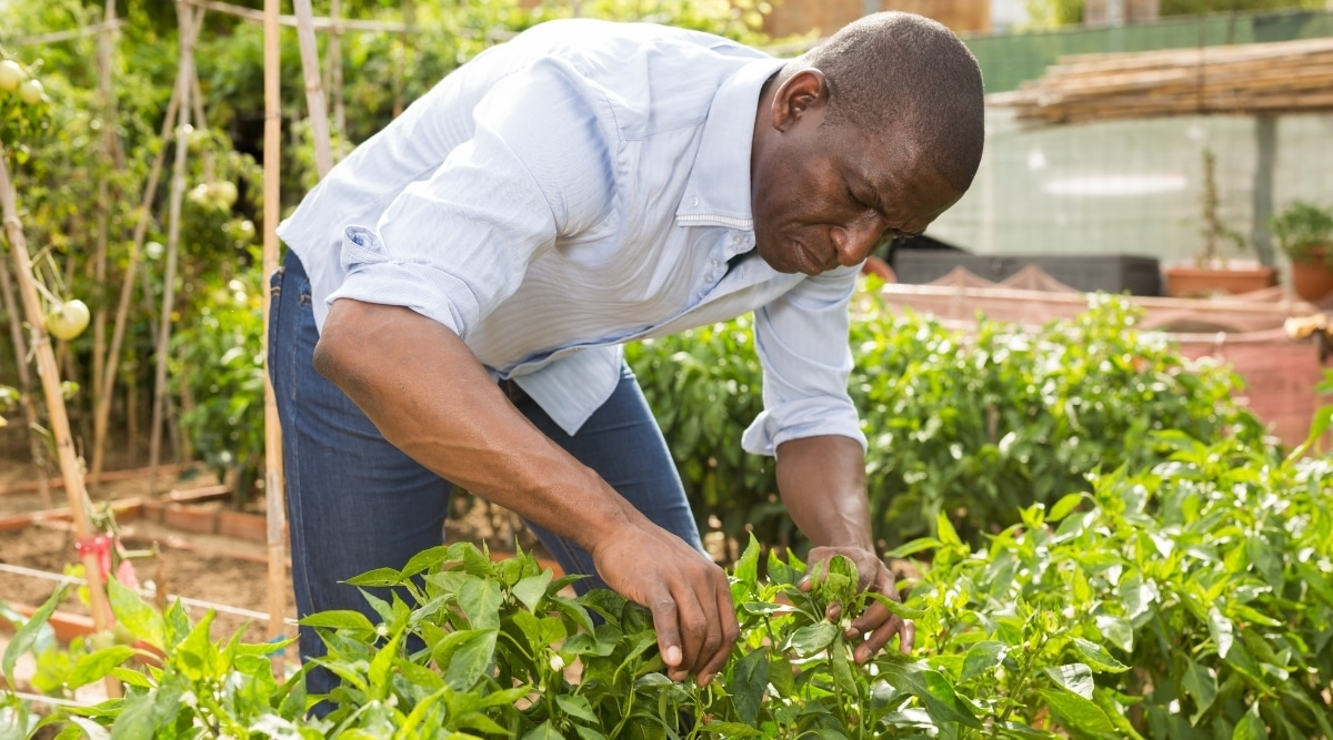 Man Working in Garden With Plants