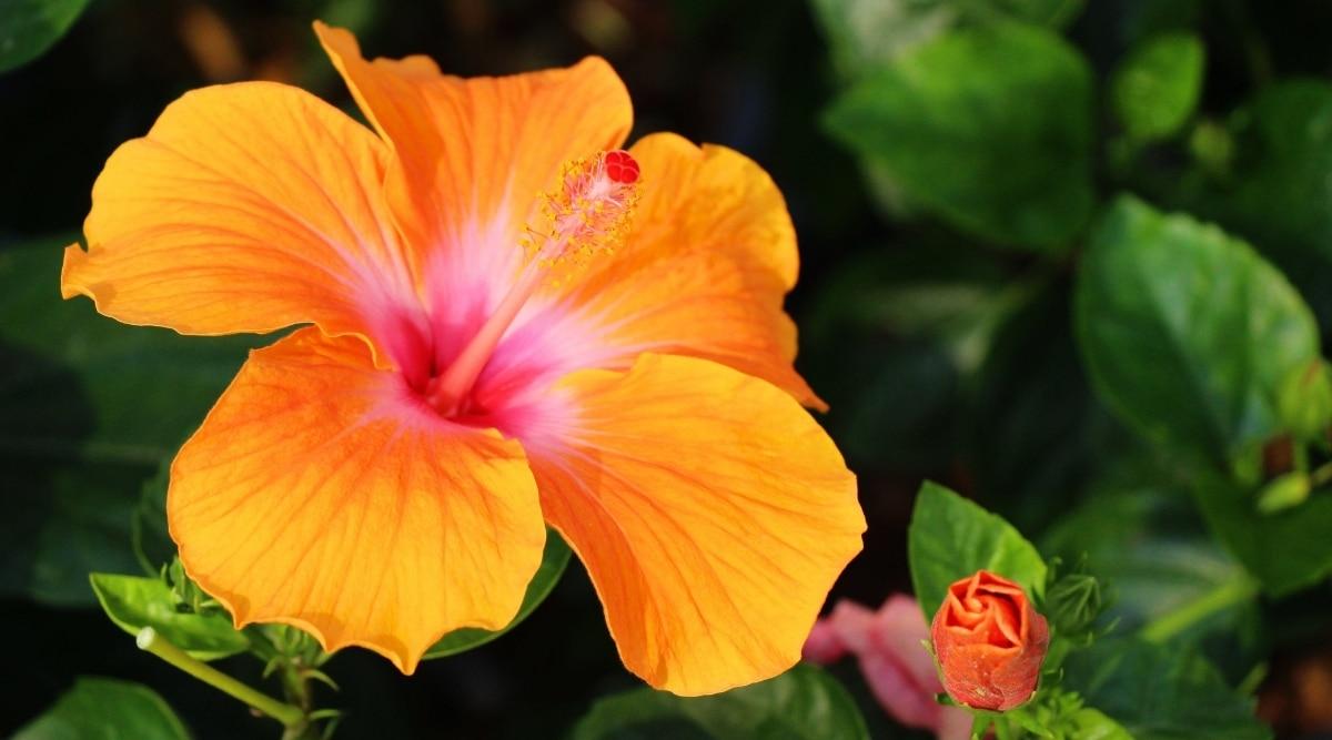 Orange Flowers in Garden