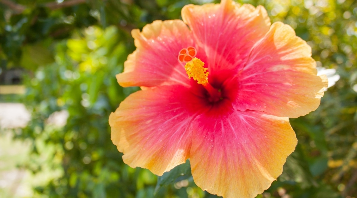 Orange and Red Flower in Sun