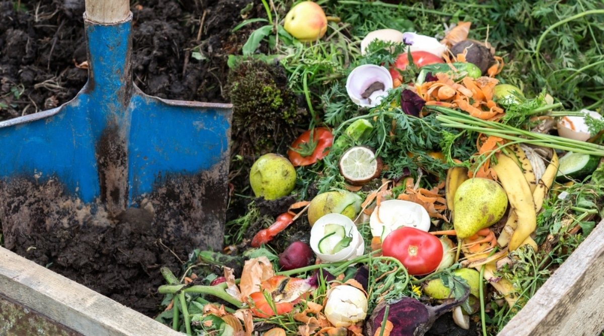 Pile of Composting Vegetables and Fruit