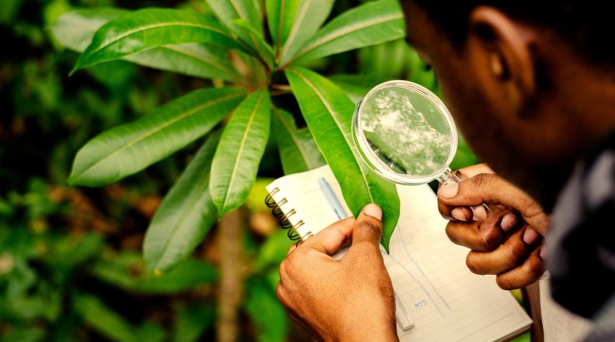Plant Scientist Studying Tree