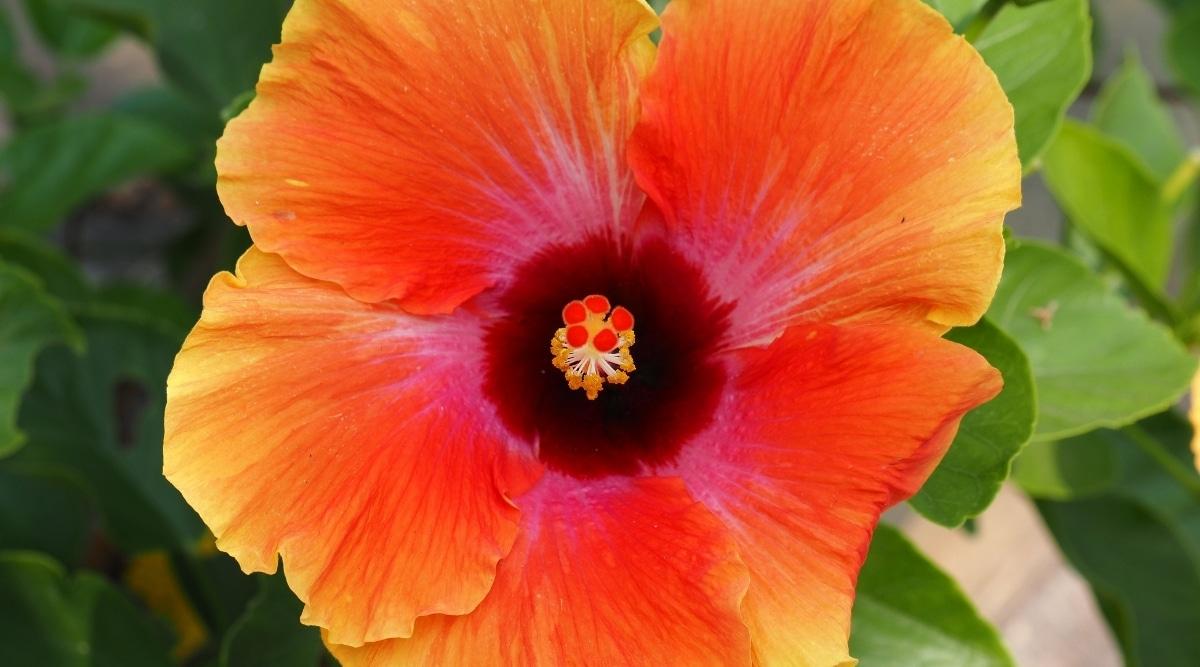 Planted Orange Blossom Flower
