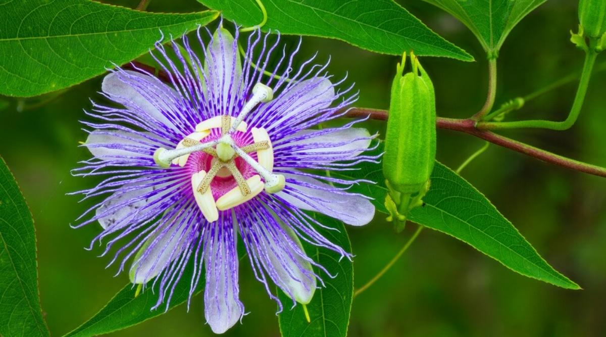 Plants Native to Florida