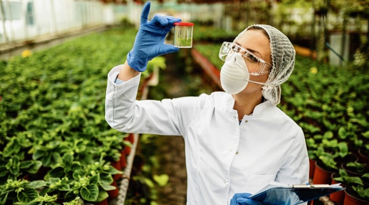 Scientist Analyzing Plant Details