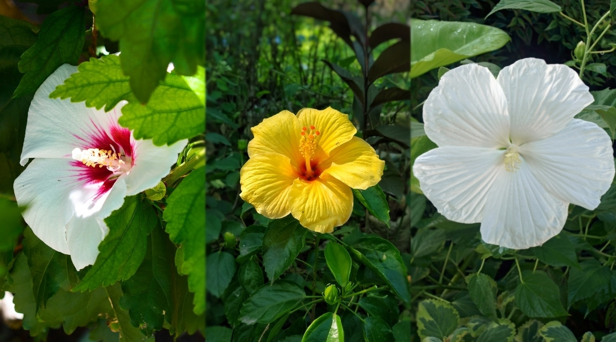 Three Different Colored Flowers in Bloom