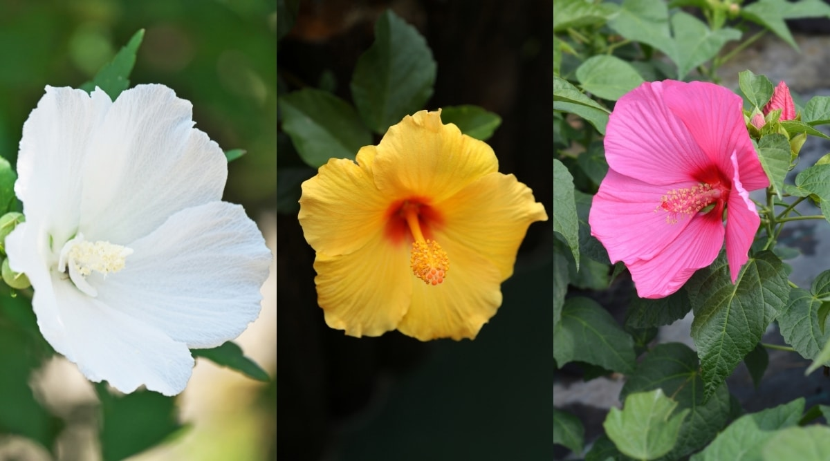 Three Types of Colorful Flowers