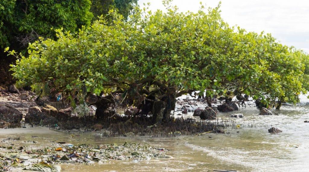 Trash Covered Tree Near Coastline
