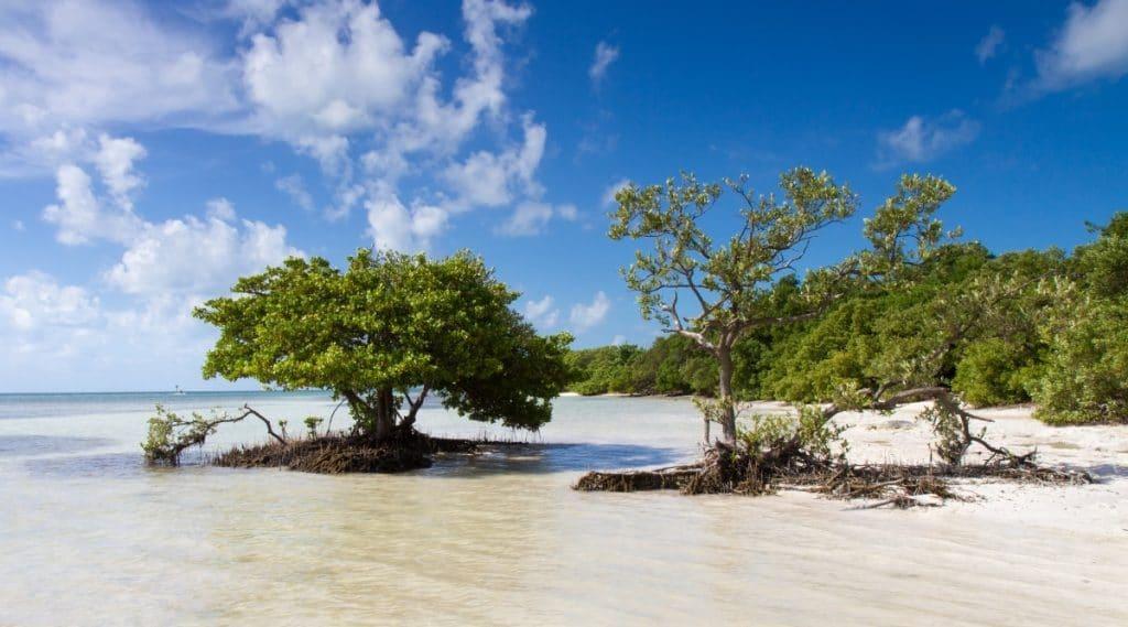 Trees in White Sand on Florida Beach