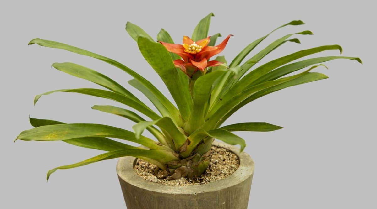 Tropical Plant in a Pot