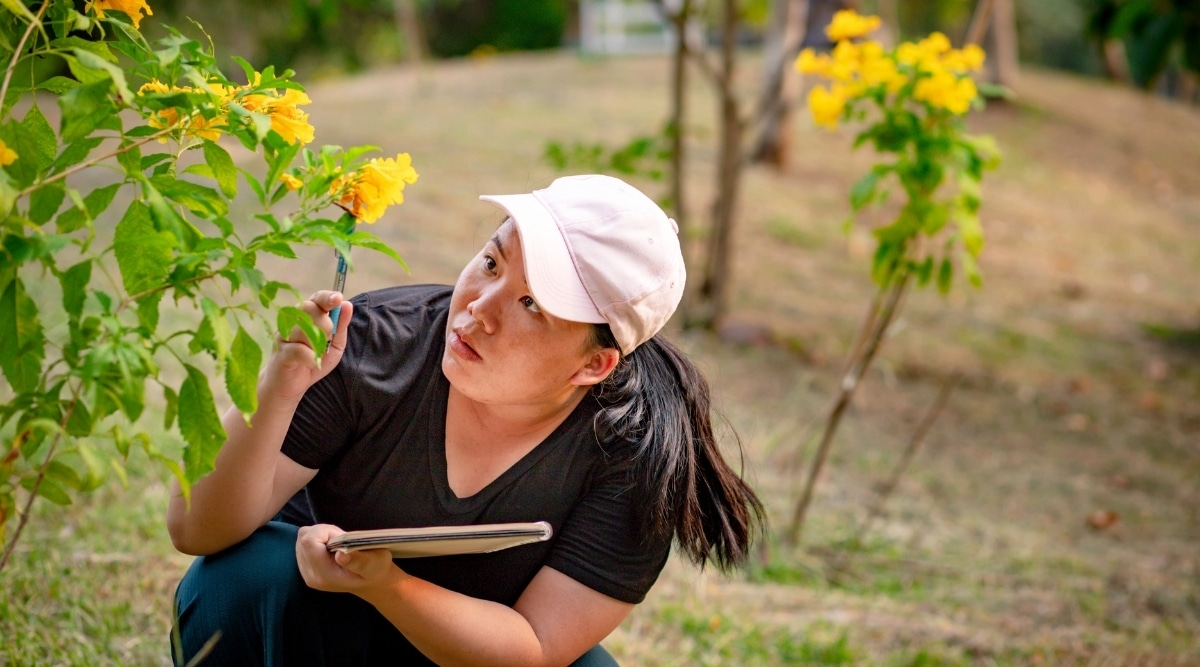 Woman Studying a Plant