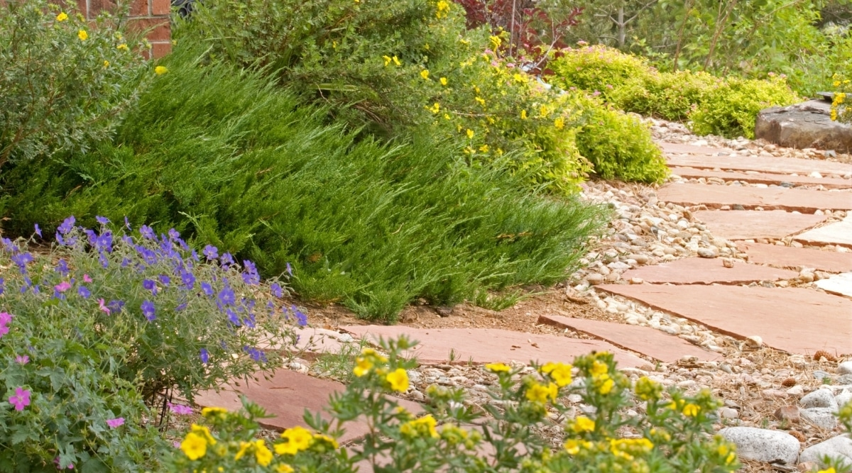 Xeriscaped Flowers Near Path