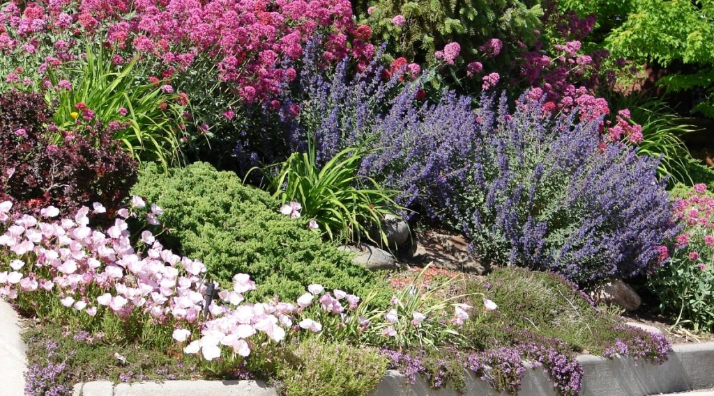 Xeriscaping in Front Yard