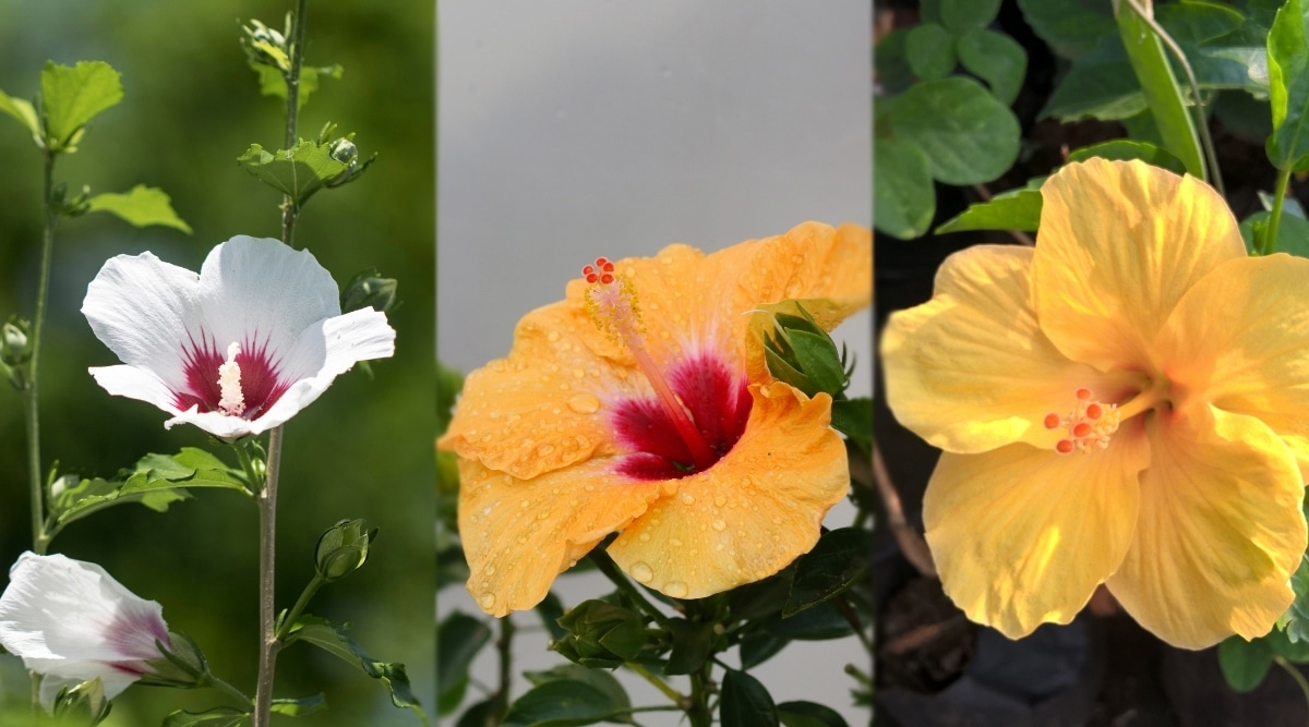 Yellow and White Flowering Plants