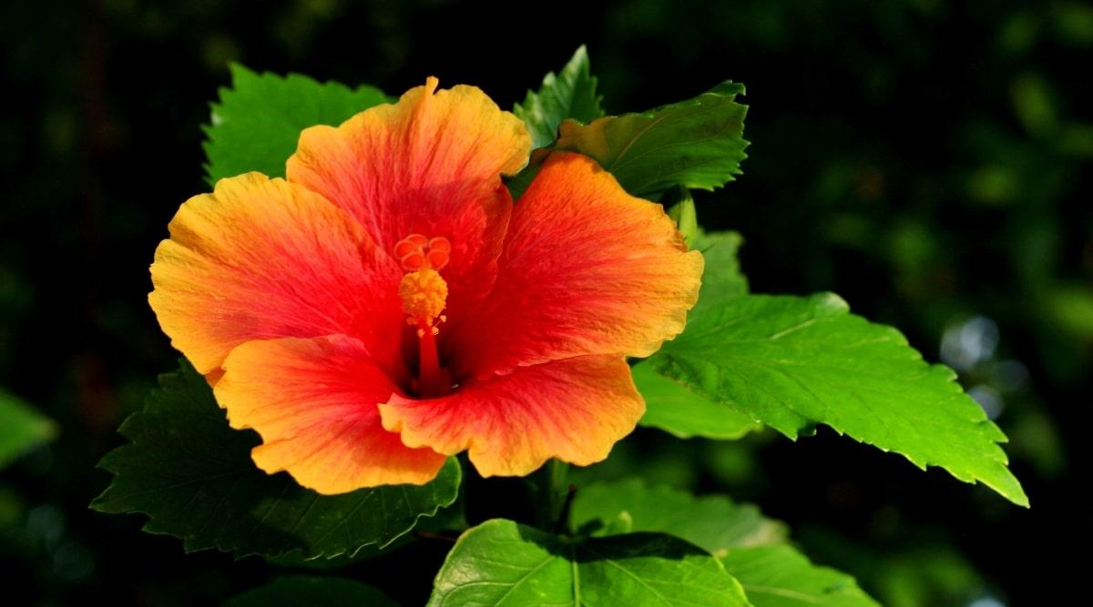 Young Orange Flower