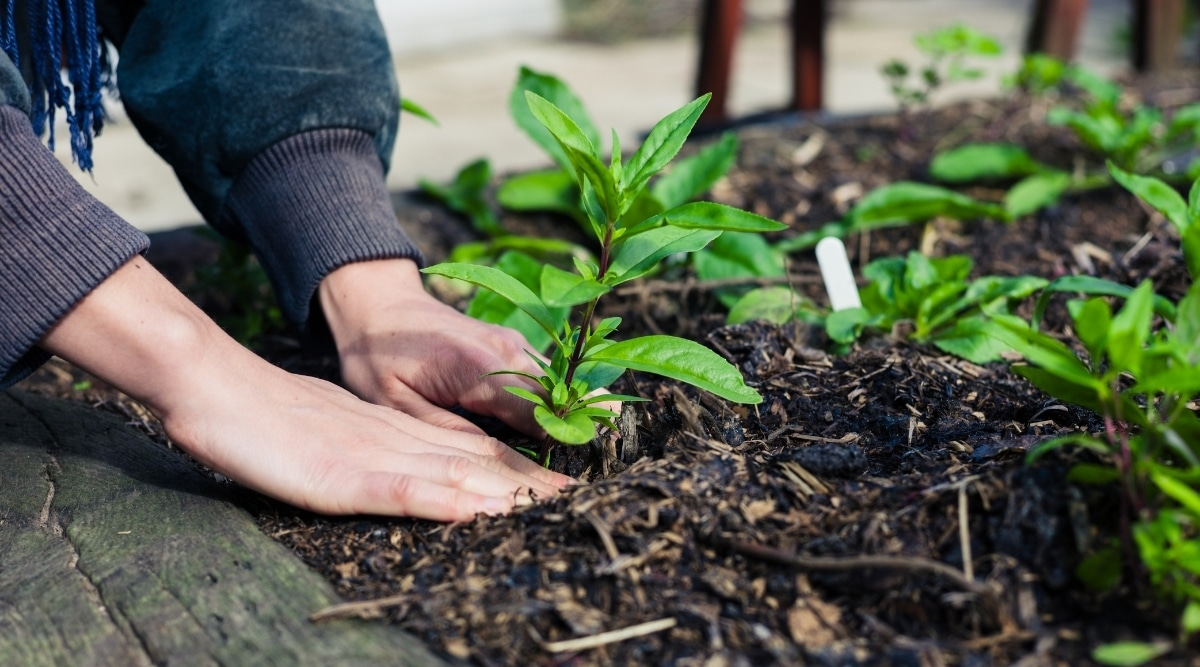 Bare Soil in a Garden