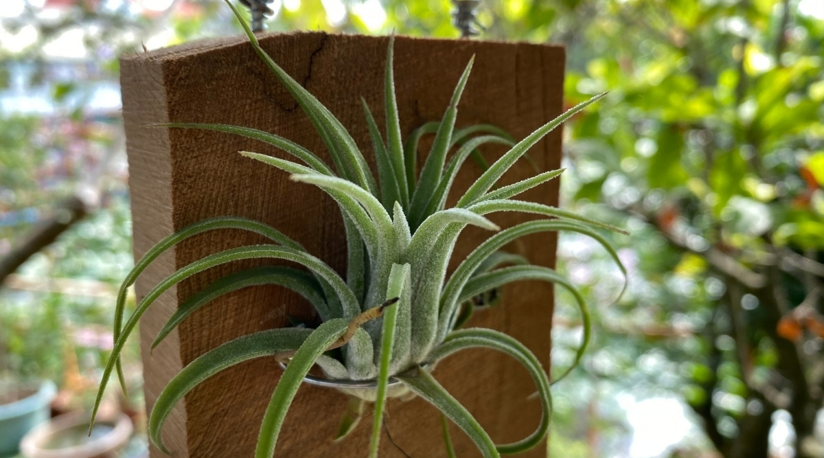 Mounted Airplant