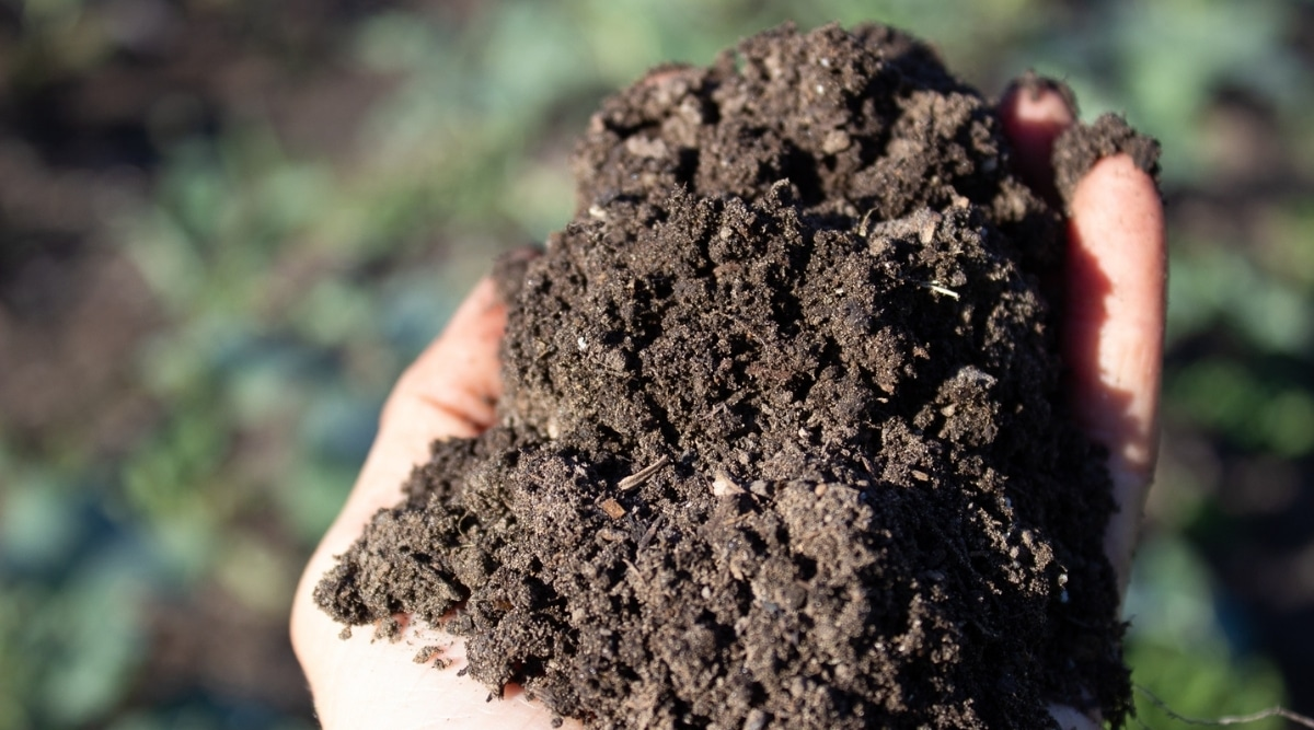 Person Holding Handful of Nutrient-Dense Soil