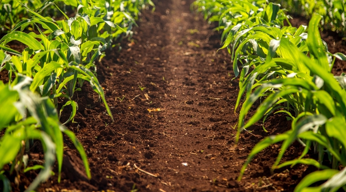 Plants in Rich and Dark Soil