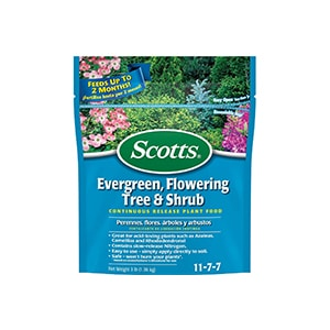 Scotts Flowering Tree and Shrub