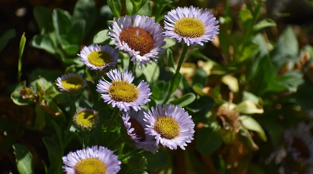 Sick Wildflowers