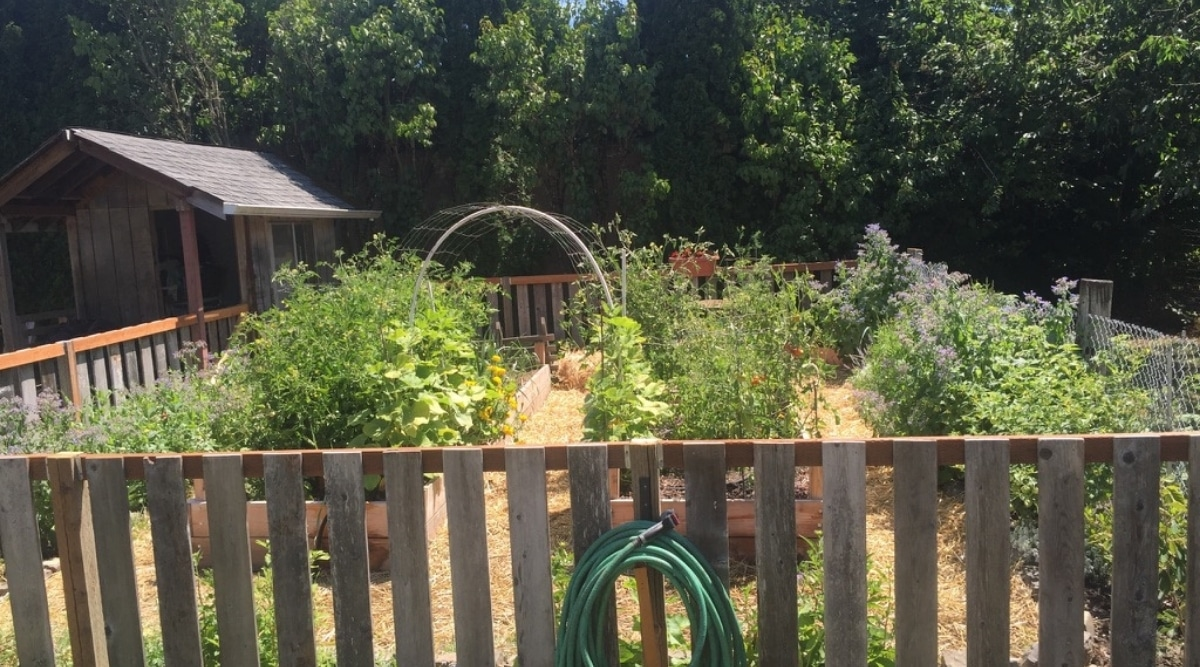 Small, Fenced-In Space for Garden Location