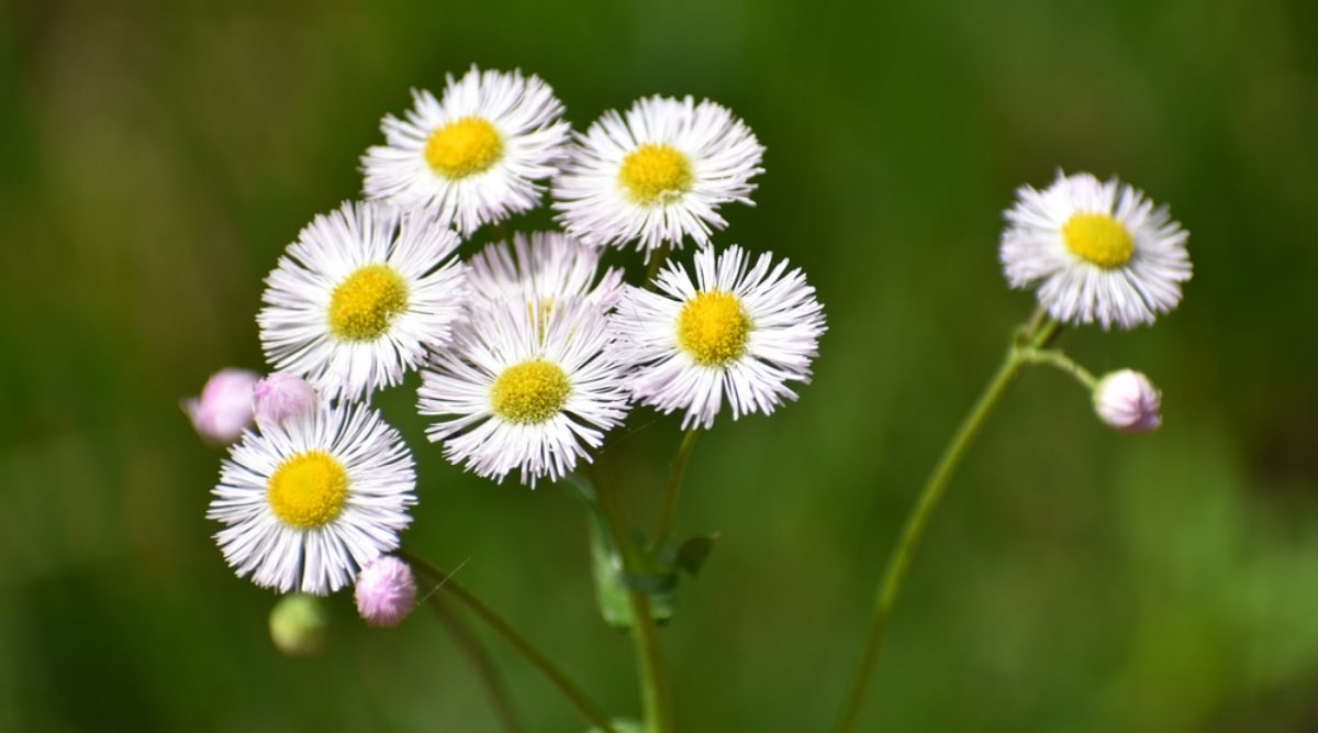 White-Flowers-With-Yellow-Centers