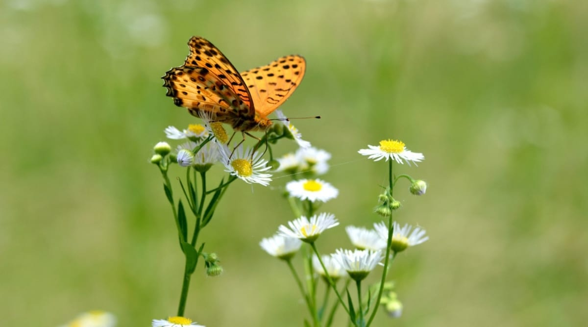 Wildflower With Orange Butterfly