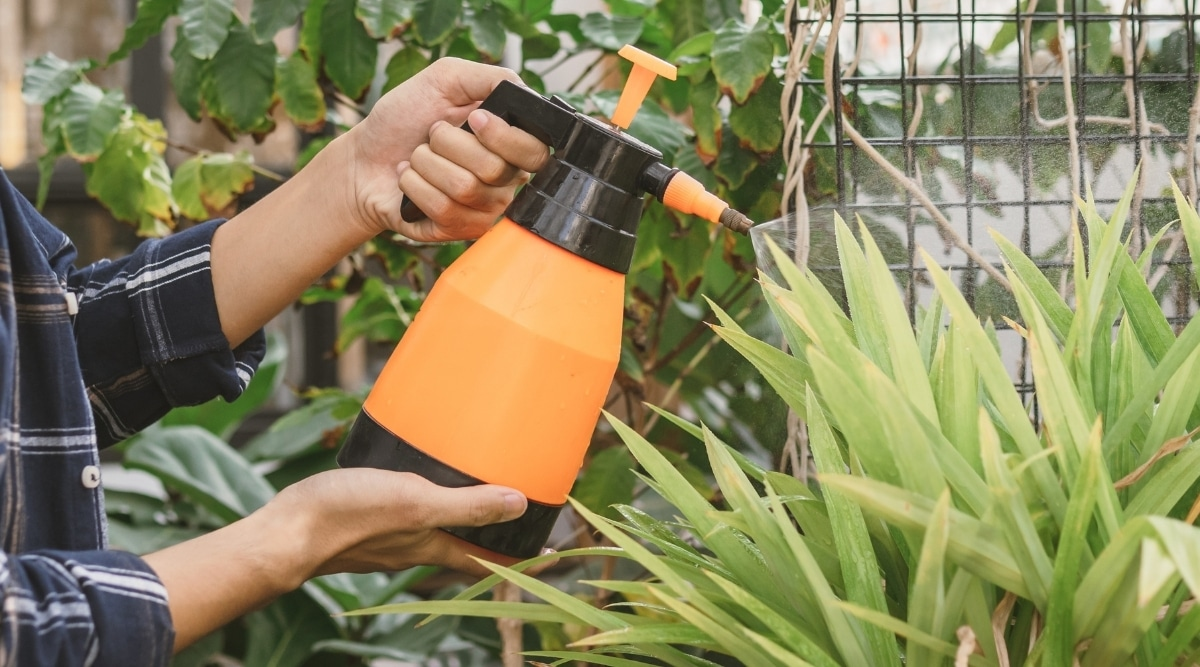 Commercial Scented Repellent Being Sprayed on Plants