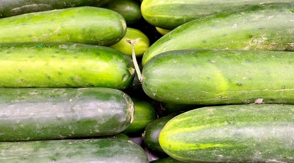Freshly Harvested Cucumbers