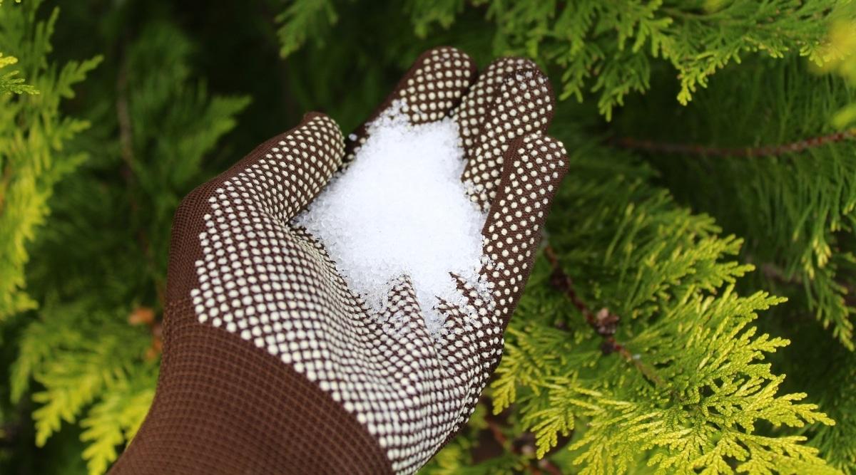 Gardener Holding Epsom Salt