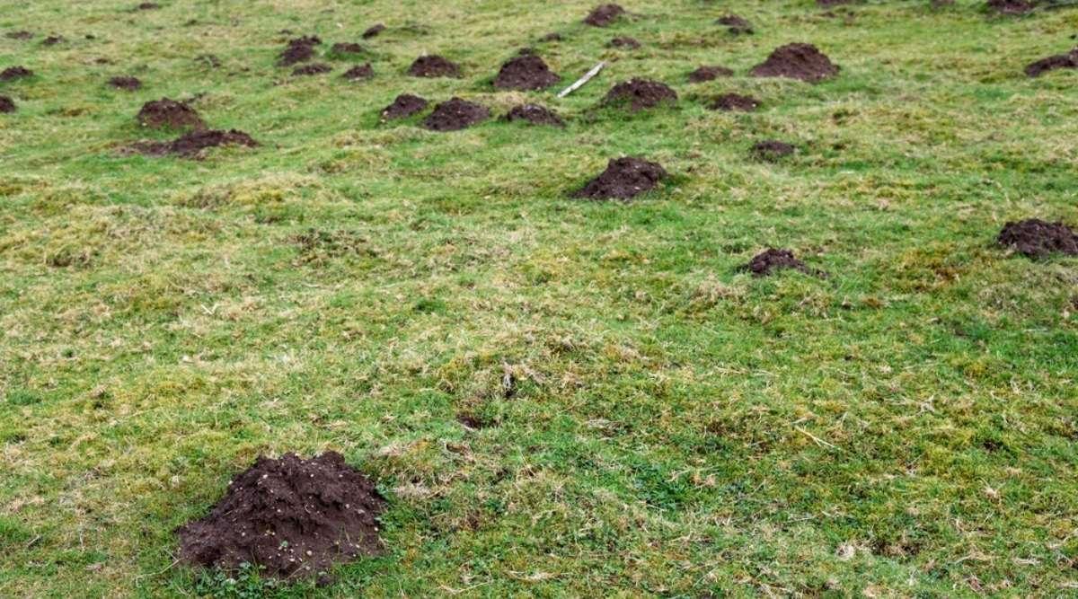 Mole Dirt Mounds