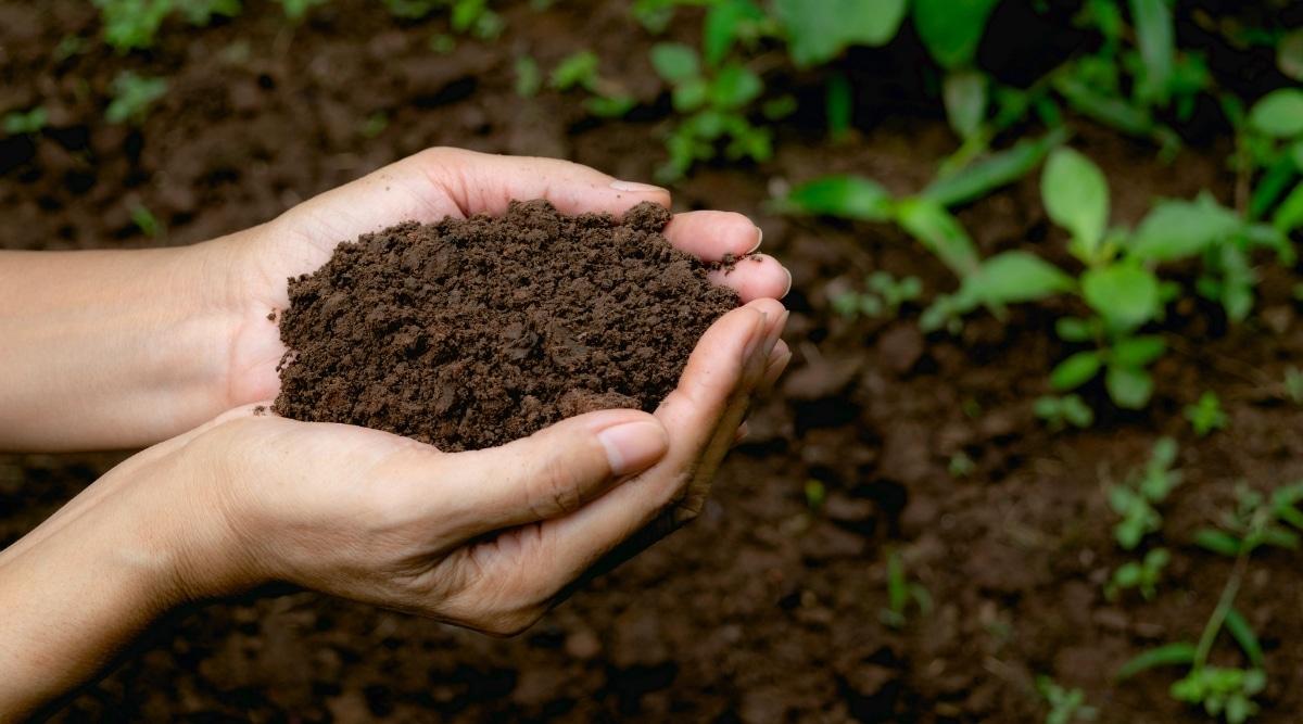 Nutrient Dense Soil