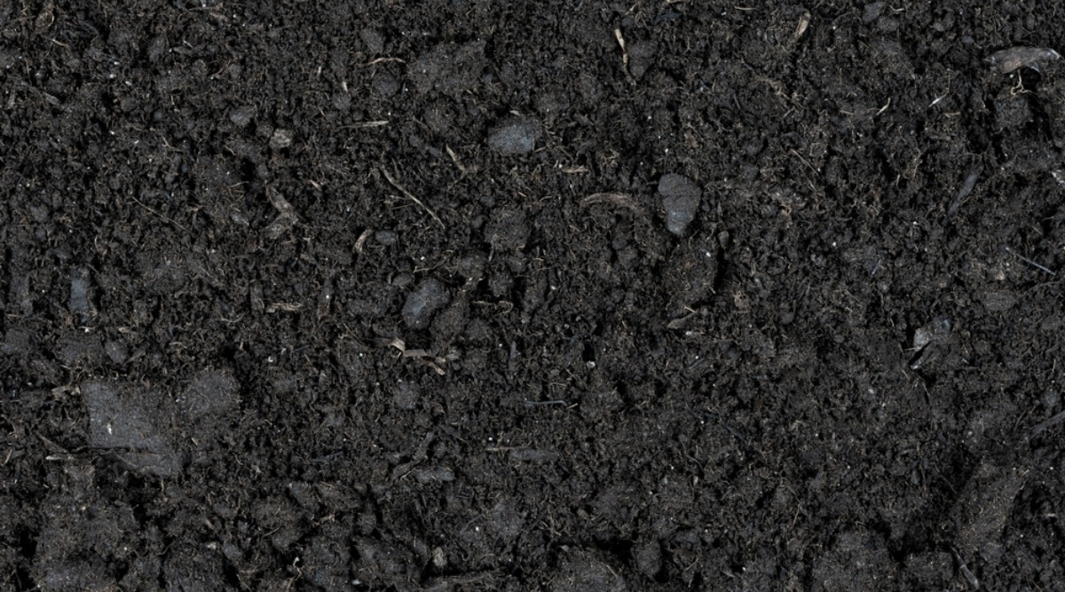 Soil Fertilized Naturally With Organic Compost