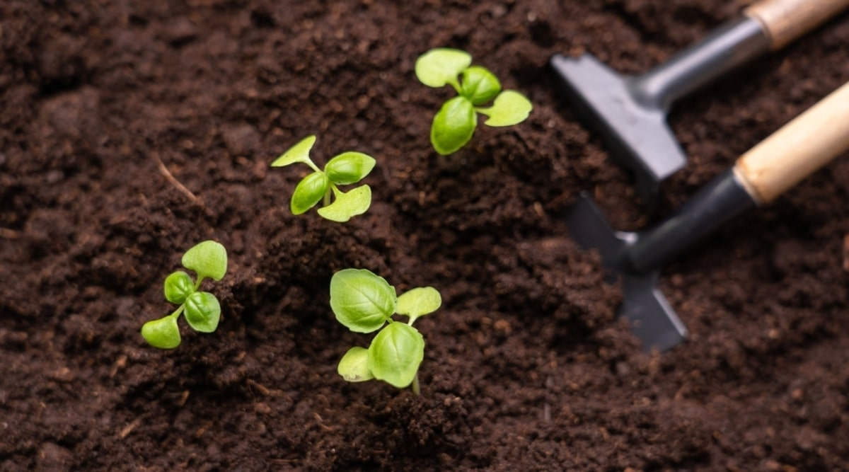 Young Herbs in Fresh Soil